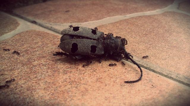 relatos-janna-mundo-escarabajo-mueriendo